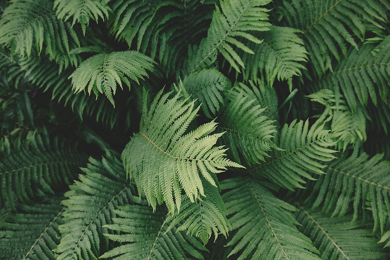 Fern roślin