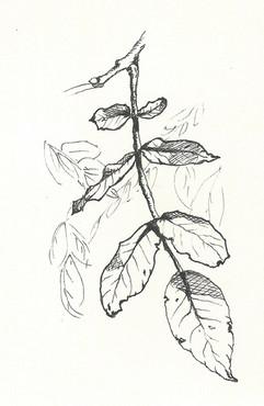 feuilles.jpeg