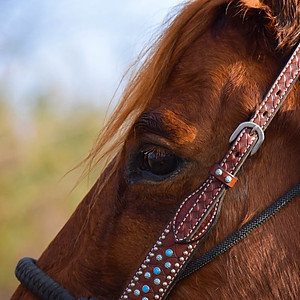 Briana's Horse Session