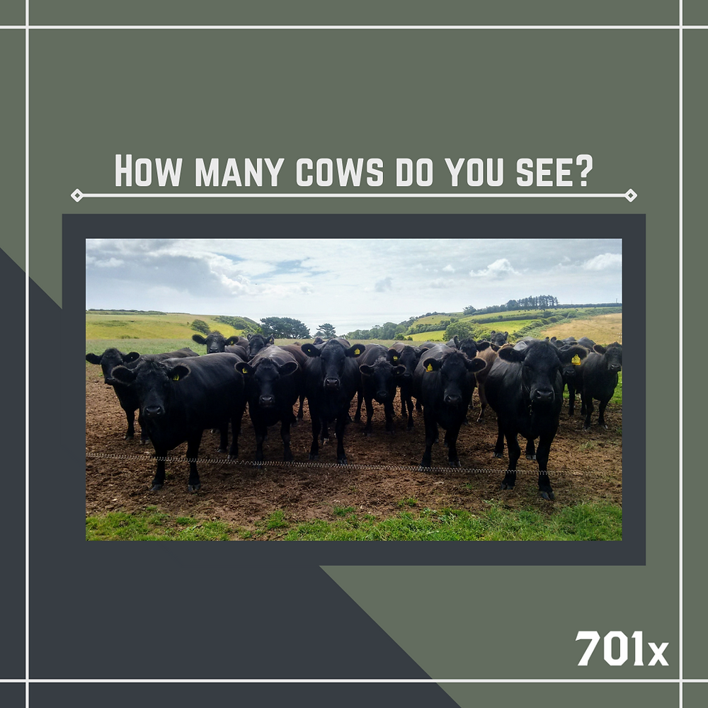 Counting cattle can be a stressful and time consuming task.