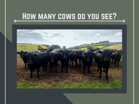 How many cows do I have?