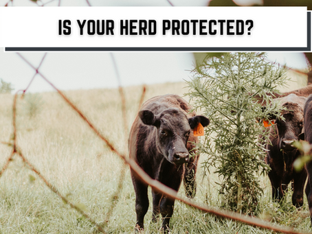 Modern-Day Cattle Theft Is a Rising Issue