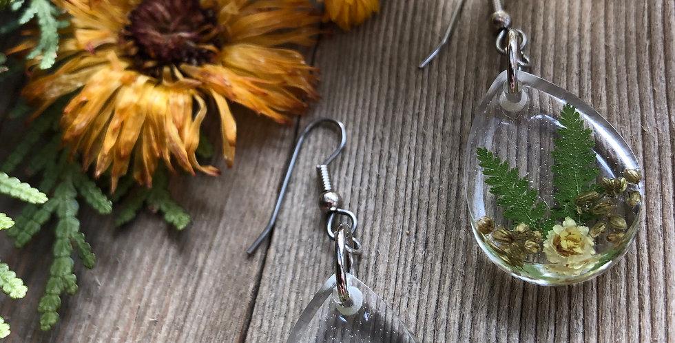 Helichrysum, Mugwort and Fern