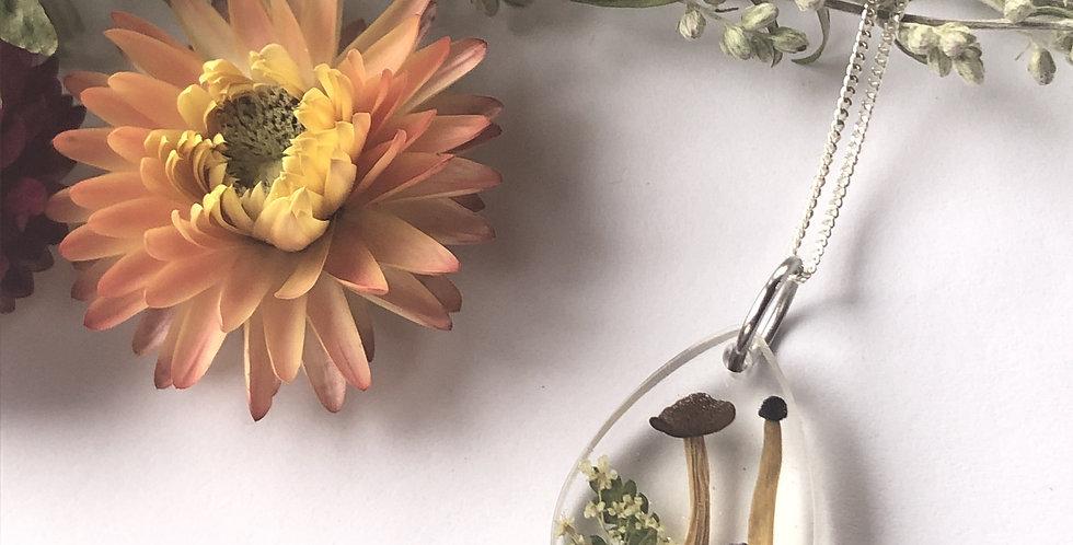 Mushrooms, Viola, Queen Anne's lace & Fern