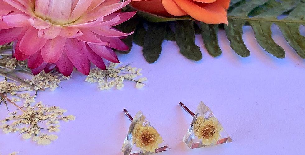 Helichrysum - Itty Bitty Botanical Studs