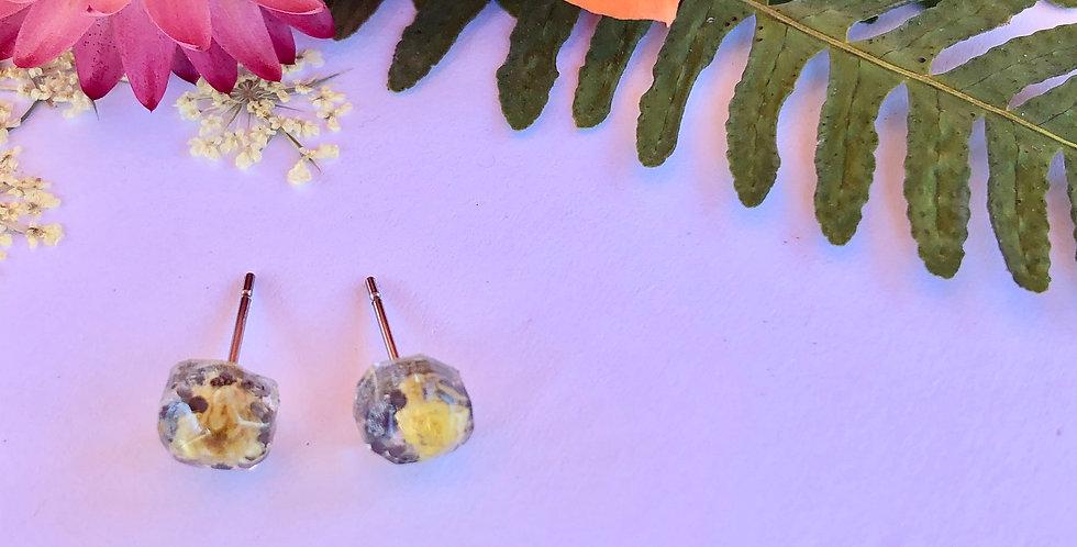 Helichrysum & Poppy - Itty Bitty Botanical Studs
