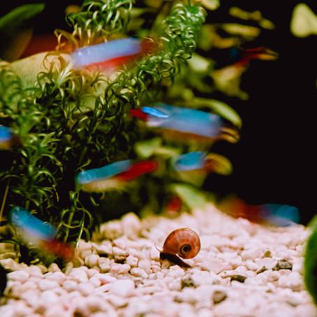 Hoe maak je kleurrijke, prachtige foto's van vissen in een aquarium zonder hinder van reflectie