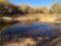 FOTESC pond before renovations.jpg