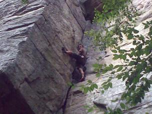 ארז מטפס 14.8.2010.jpg