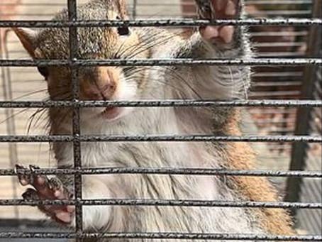 Meth Addicted Squirrel