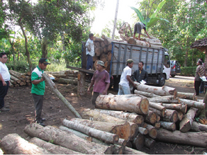 Evolution and Revolution Telapak: Seeking Natural Resource Justice for Communities