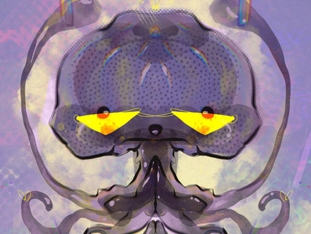 neix medusita kollective
