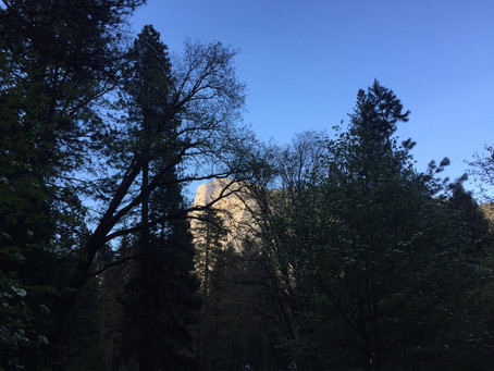 Yosemite in the Spring: Waterfalls, Rivers & Dogwoods in Bloom