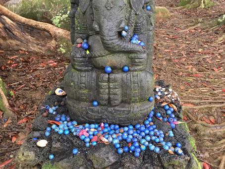 Rudraksha trees and a Shiva temple in Kapa'a, Kauai
