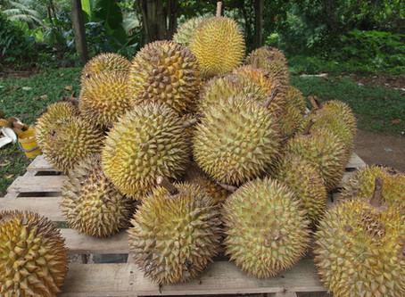 Durian (an experiment)