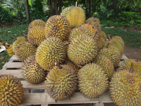 Durian (an experiment)