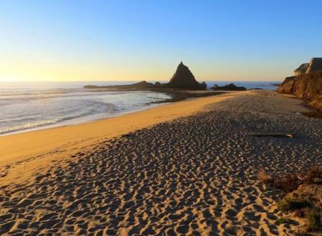 The Billionaire and the Beach