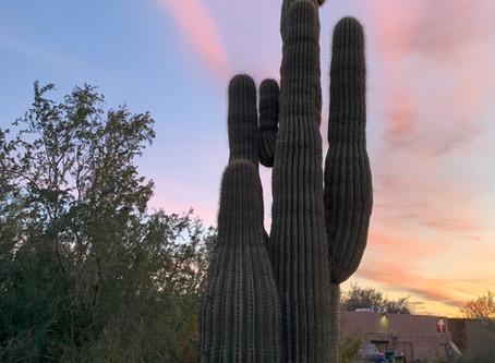 Magic in the Moonlight: Desert Botanical Garden in Phoenix, Arizona