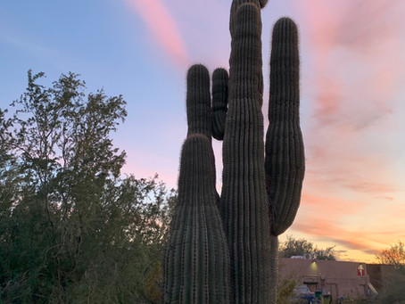 Magic in the Moonlight: Desert Botanical Garden in Phoenix, Arizona