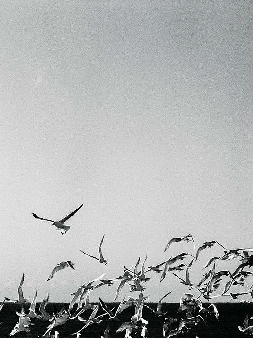 Birds BW