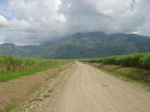 Sugarcane+field+Honduras.JPG