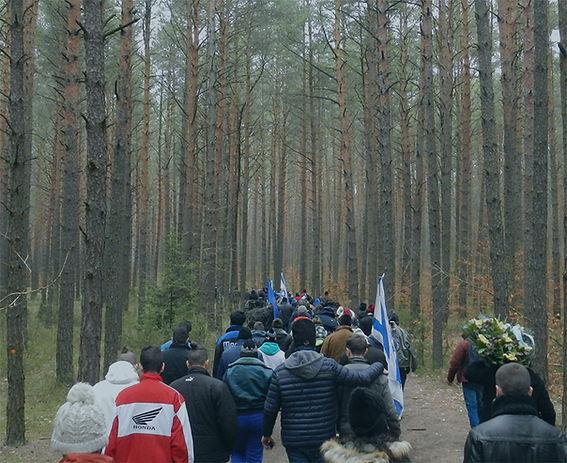 פולין - יער.jpg