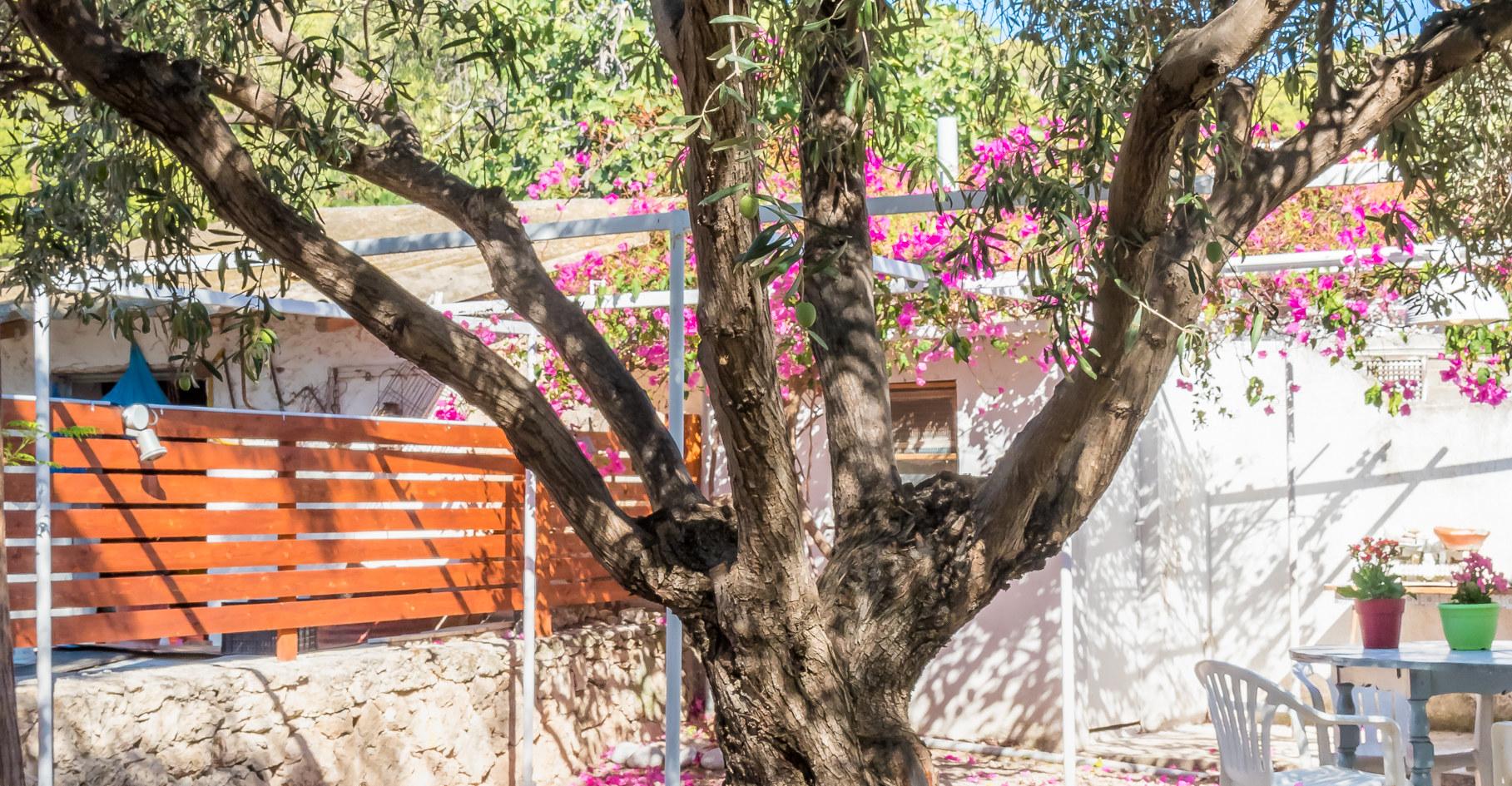 Aegina family house for rent