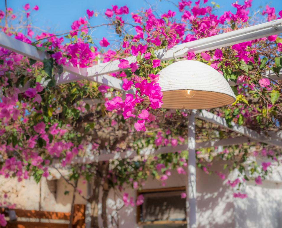 Aegina family houses to rent