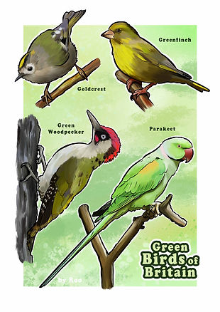 Green birds of Britain_FOR PRINT_PROOF.j
