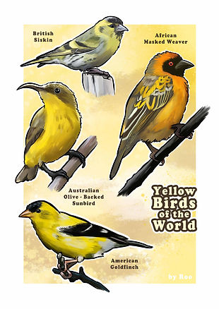 Yellow birds of AFRICA_FOR PRINT_PROOF (