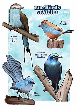 Blue birds of Africa_FOR PRINT_PROOF.jpg