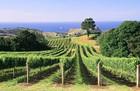 vineyard .3.jpg