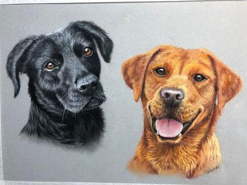 Two labradors 2.jpeg