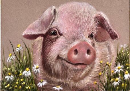 Pig.jpeg