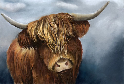 Highland Cow 3.jpeg