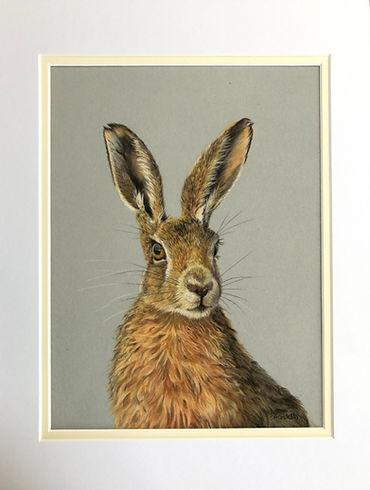 Hare 2.jpeg