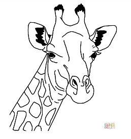 Giraffe drawing.jpeg