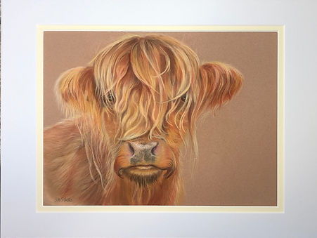 Highland Cow 2.jpeg