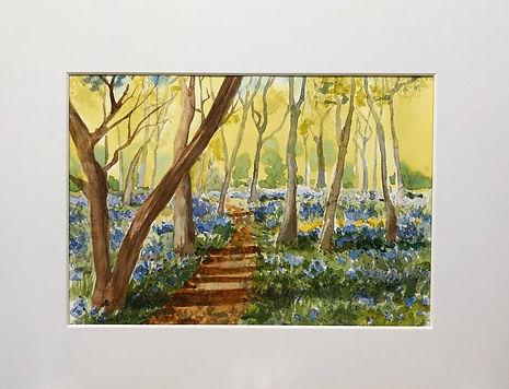 Sunny Bluebell Woods.jpeg
