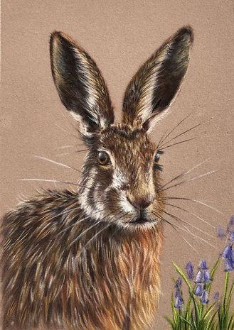 Hare 4.jpeg