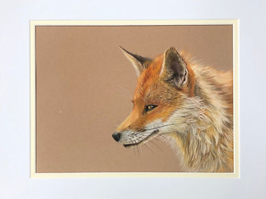 Fox pastel.jpeg