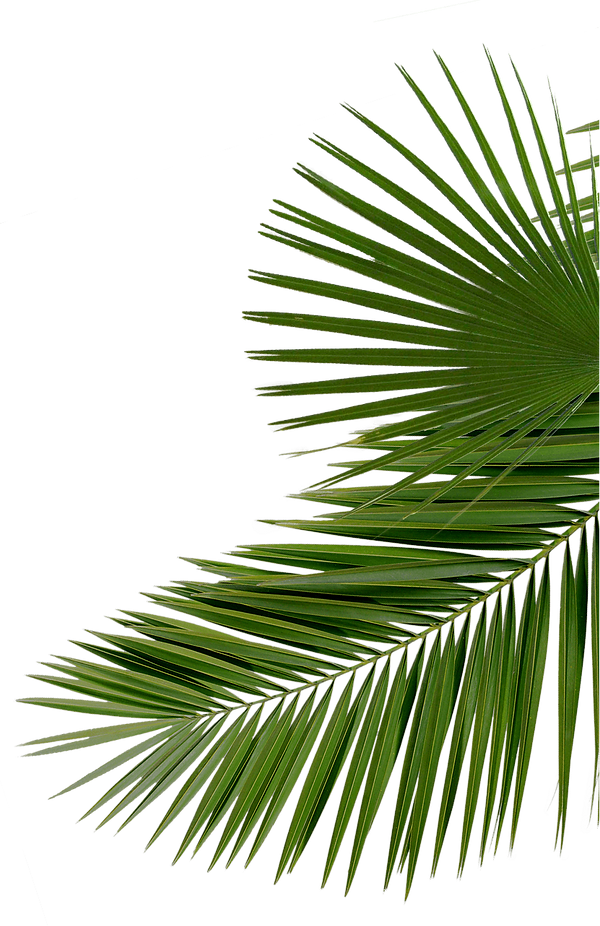 2pngfind.com-palms-png-288093.png