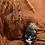 Thumbnail: Skull and Coffin Dangles