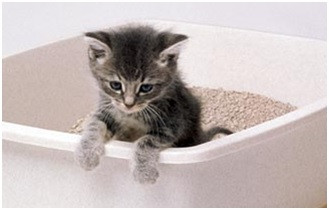 Solving litter box and spraying problems