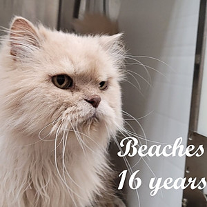 Senior kitties