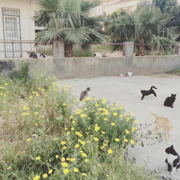 猫集会の広場