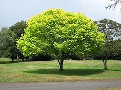 Tree Shaping