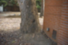 tree damage 3.JPG
