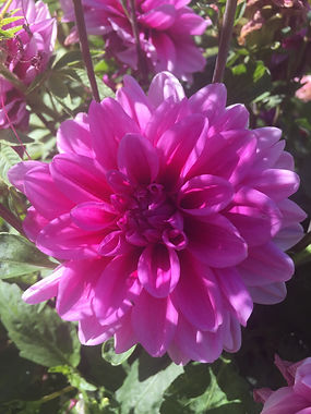 Fleur jdp.JPG