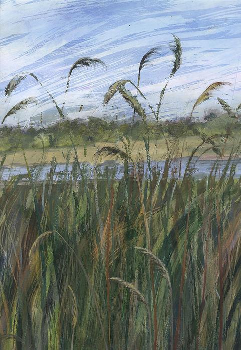 grasses june30th (1).jpeg